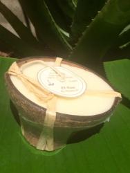 LS crea concha de coco